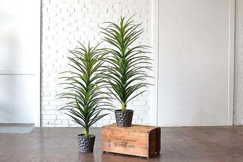 Faux Potted Plants available for rent by Paisley & jade